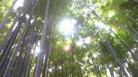 090923_155326報国寺の竹林