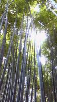 200909231554000報国寺の竹林