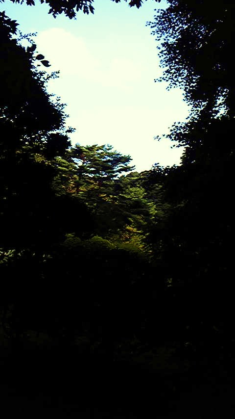 明治神宮091012_154959