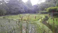 小石川公園091018_163046