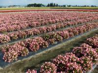 たいゆう花畑