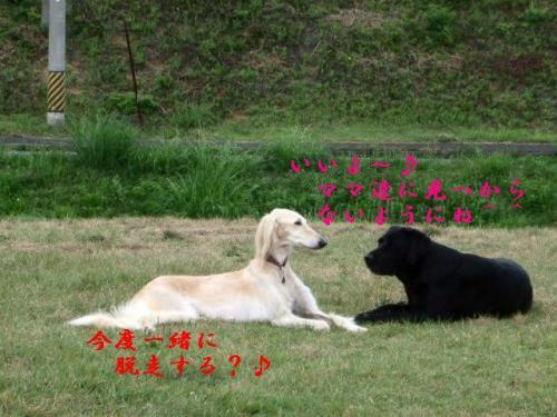 せらは脱走犯4