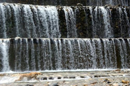 9月も川遊び3
