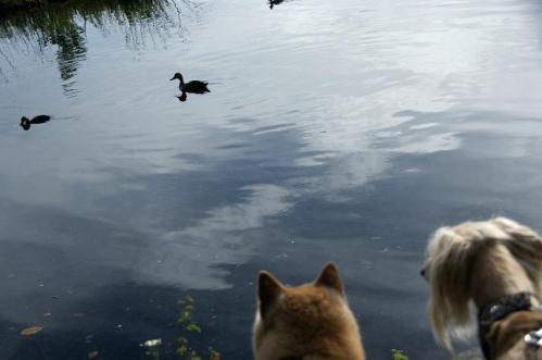 女神湖15