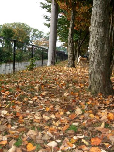 落ち葉のラン1