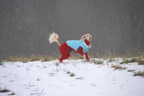 犬トレイル13