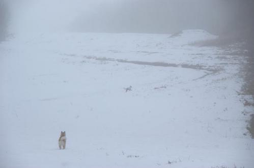 犬トレイル14