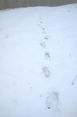 犬トレイル15