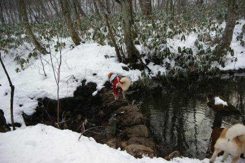 犬トレイル17