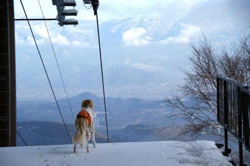 犬トレイル1
