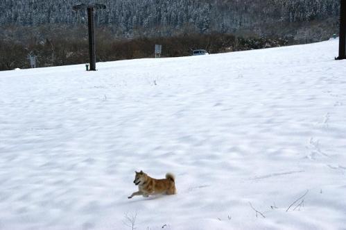 犬トレイル2