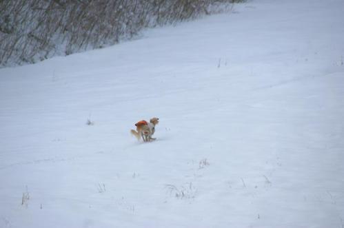 犬トレイル6