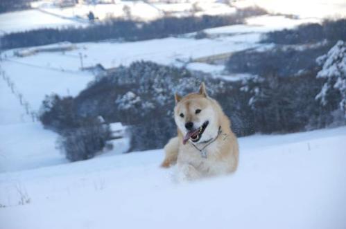 犬トレイル8