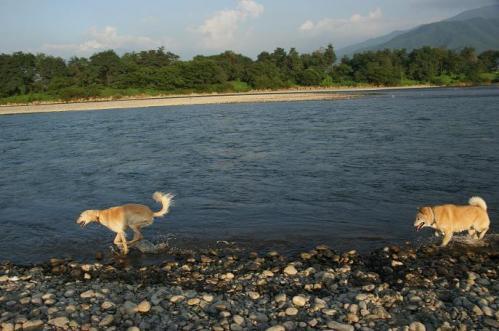 お山と川とフラダンス13
