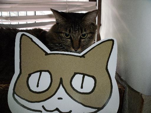 090823くる猫25