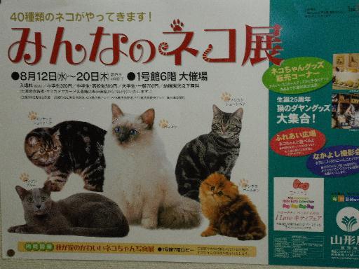 090819猫展01