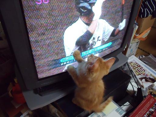 猫野球観戦09080207