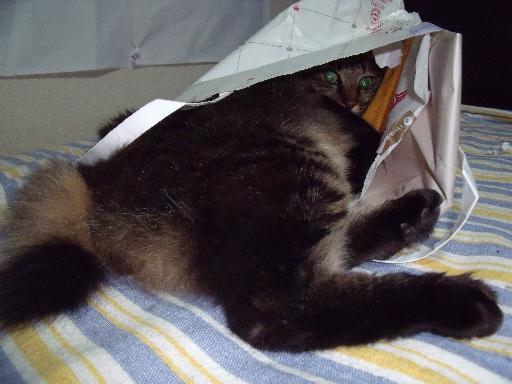 090823くる猫11