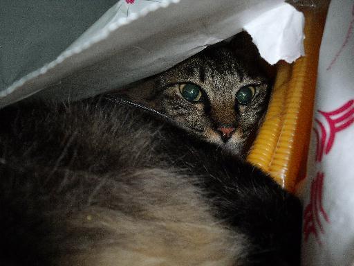 090823くる猫12