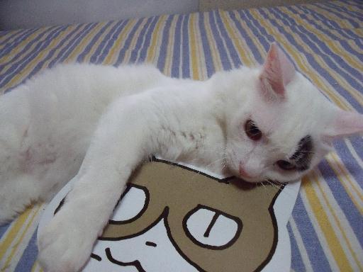 090823くる猫29