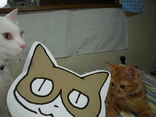 090823くる猫27