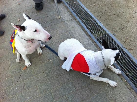 写真:11月14日に450人参加の「緊急デモ in 神戸」にも参加したとの書き込みがあった愛国犬