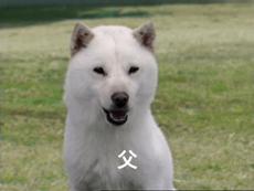 ソフトバンクの犬のお父さん