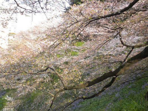 2010.4.11千鳥ヶ淵
