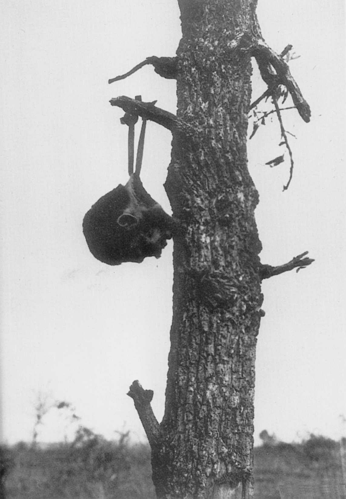 吊るされる日本兵の首。(1945年ビルマ、アメリカ軍撮影とされてる)