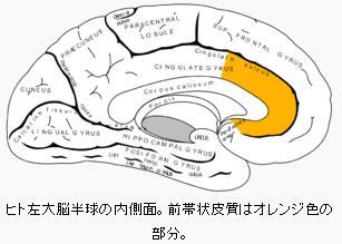 前帯状領域