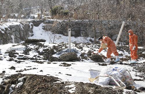 ソウル近郊の京畿道で11日、殺処分した家畜の埋却地を点検する自治体職員