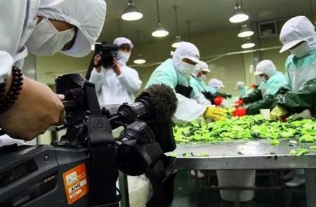 日本に緊急輸出野菜加工、日本NHK記者が浙江省嘉興市の食品工場で取材