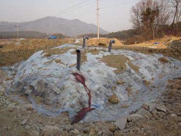 韓国では口蹄疫による家畜埋却地での2次汚染が全国的に懸念されている