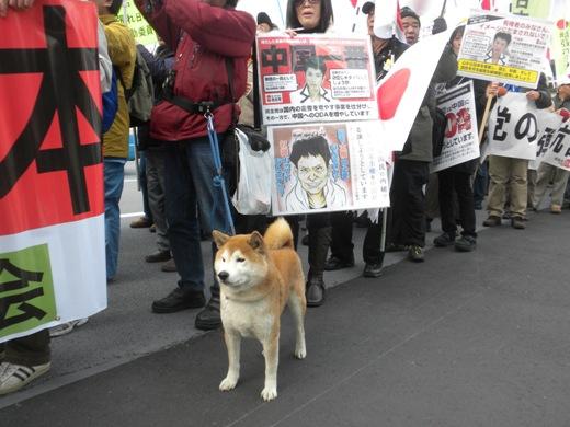 「頑張れ日本!」設立一周年 1.29 亡国「TPP」絶対阻止!中国尖閣占拠絶対阻止!民主党(菅)内閣打倒!「第三の潮流」へ!国民大行進ワンコ犬