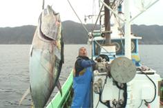 決定版!津軽海峡巨大マグロ戦争・洋上の激闘2010
