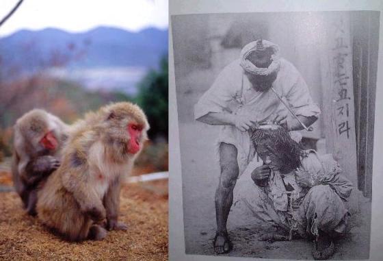 実際に猿以下だった朝鮮人