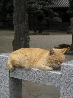 2011..4.30 cat