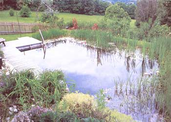 193-064-01-naturalpool