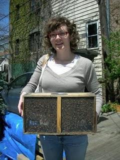 街で蜂ですか?