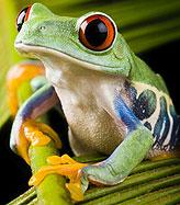 frog_looking