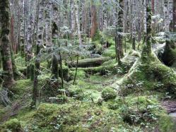 白駒池周辺の苔3