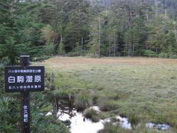 白駒湿原1