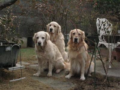 ブルーベリーと3頭の愛犬