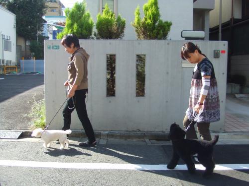 お散歩練習3