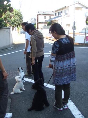 お散歩練習2
