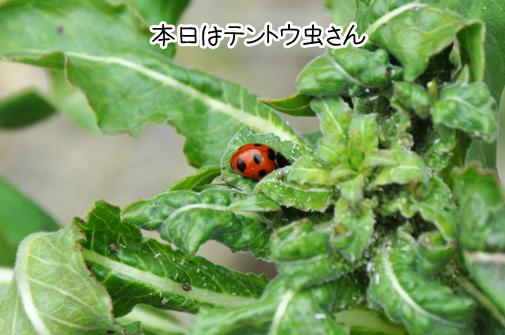 03apr11ladybug01
