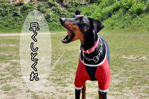 04jun11riru03