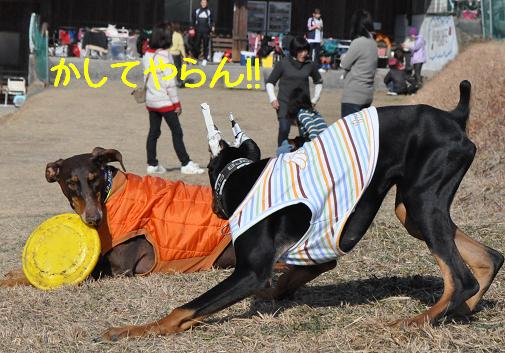 09jan11azuki02