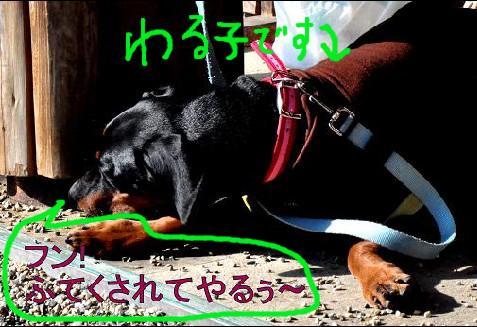 09jan11riru04