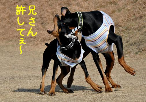09jan11kotetsu&yukichi
